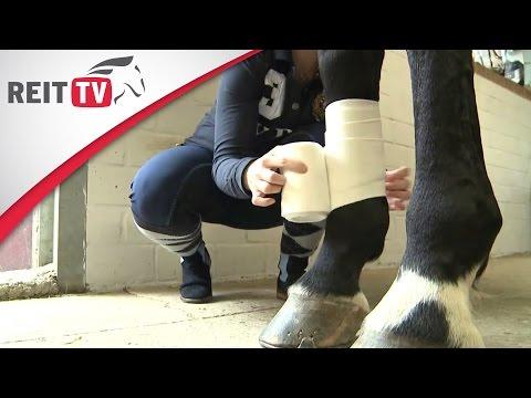 Ausrüstung: Das Pferd bandagieren - So geht's richtig