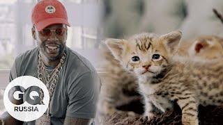 Самые дорогие вещи в мире: котята за $165 000