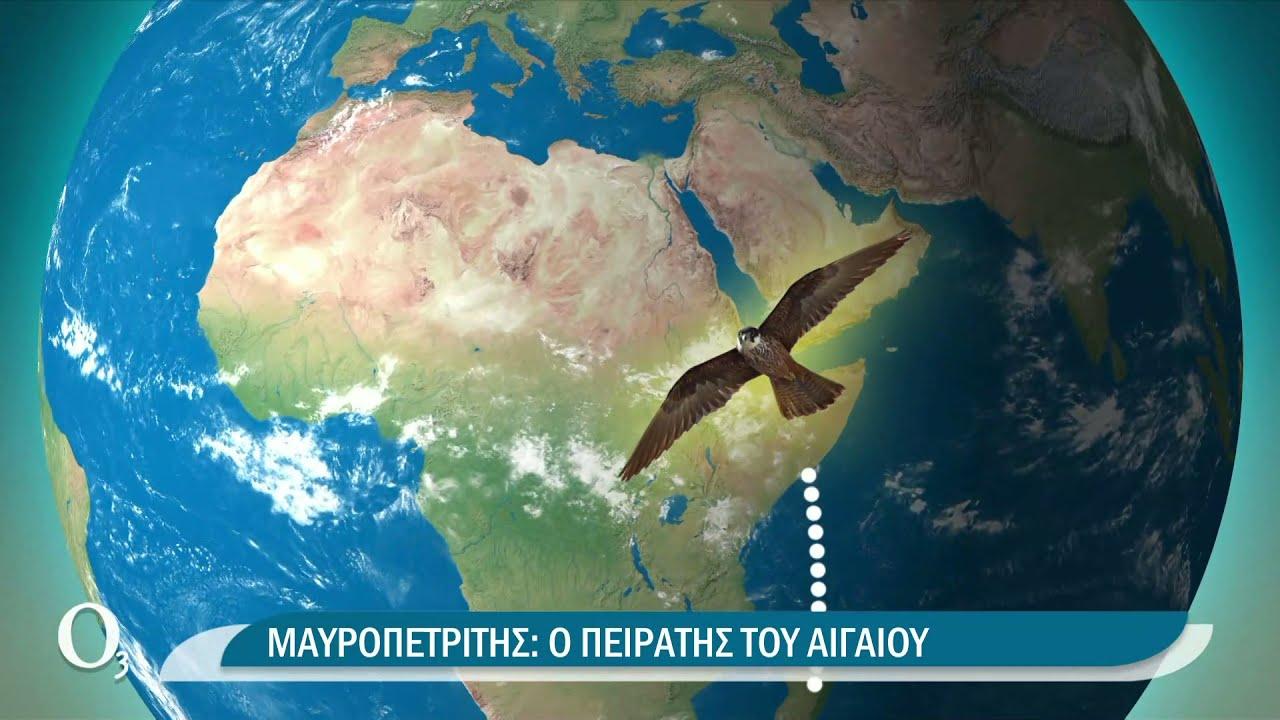 Ο σπάνιος Μαυροπετρίτης από τη Μαδαγασκάρη στα Αντικύθηρα | 28/09/2021 | ΕΡΤ