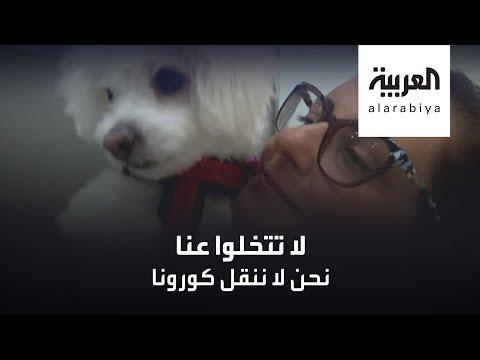 العرب اليوم - شاهد: عيادة بيطرية في القاهرة تتبنى مبادرة إنسانية لحماية الحيوانات