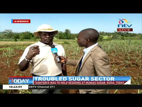 Focus on the troubled sugar sector