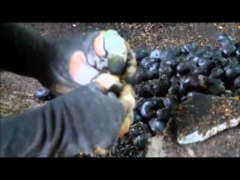 St.Pauls Cashew Factory Video New 1