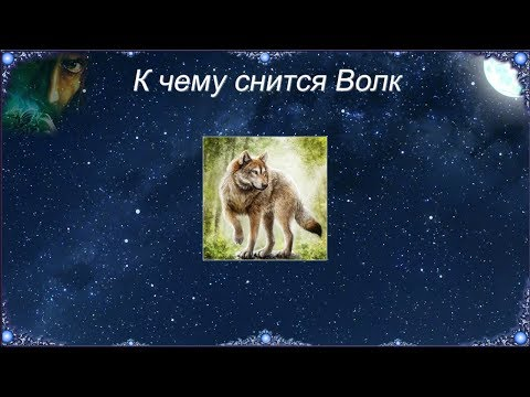 К чему снится Волк (Сонник)