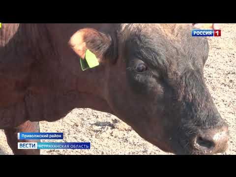 В Астраханской области специалисты Управления Россельхознадзора проверяют фермерские хозяйства по соблюдению ветеринарных правил