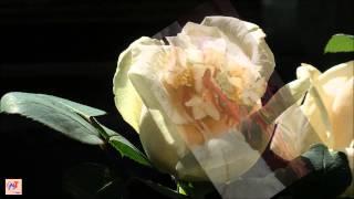Sang Ngang_ĐỔ LỄ - Vũ Khanh