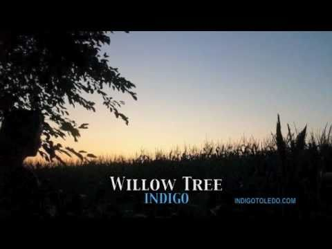 Indigo - Willow Tree live at Mayberry Square