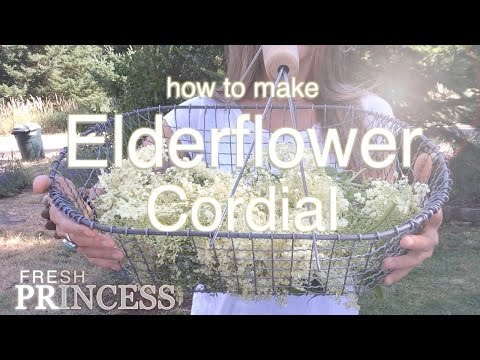 Video How to Make Elderflower Cordial with Honey |  Fresh P