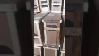 В «Укрпочте» заявили, что воскресили 8 млн погибших при перевозке пчел. ВИДЕО
