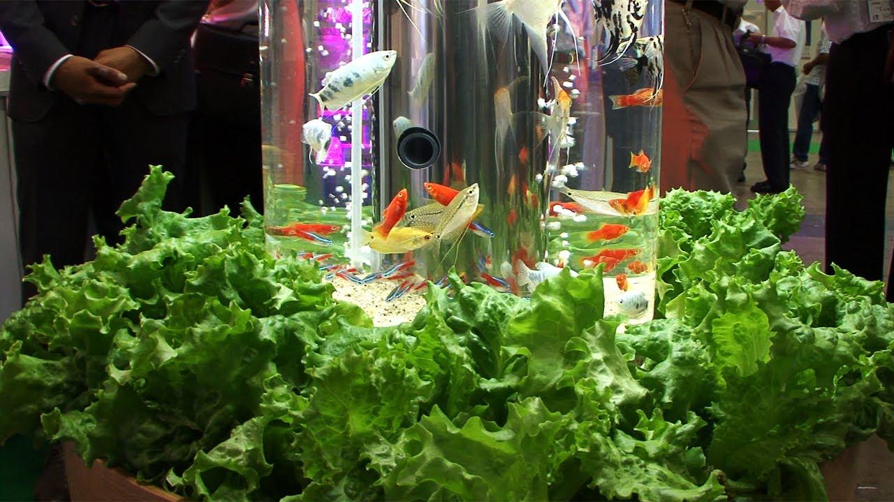 Magic Aquatic Garden Turns Fish Crap Into Plant Food