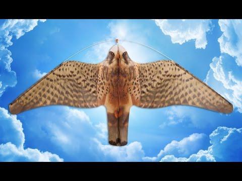 Optische Vogelscheuchendrachen zur Vogelabwehr
