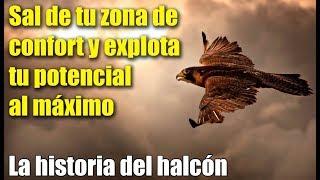 Sal de tu zona de confort y explota tu potencial al máximo - la historia del halcón