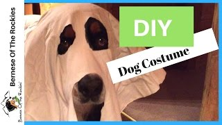 DIY Halloween Dog Costume (Ghost)