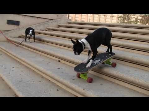 Humor video E-cards, Hilarious skateboarding dogs  funny humor
