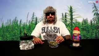 Strain Review w/ Dr. Greenthumb - Krapes | BREAL.TV