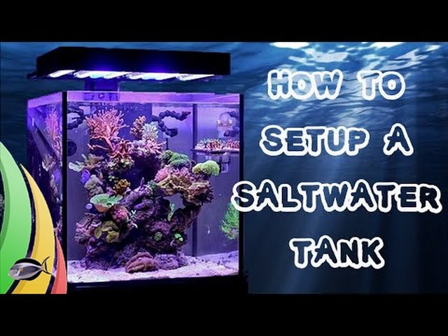 How To Set Up A Saltwater Fish Tank / Aquarium