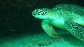 preview picture of video 'Diving at Soneva Fushi, Maldives'