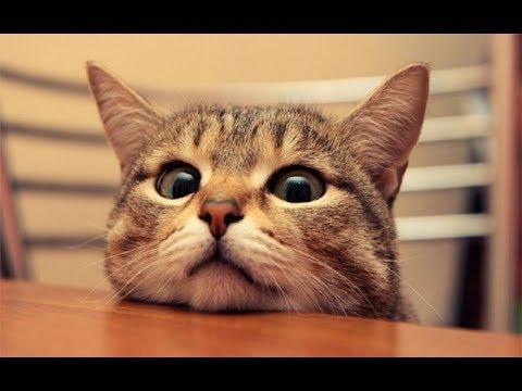 Download 96+  Gambar Kucing Yang Lucu Dan Imut Paling Imut