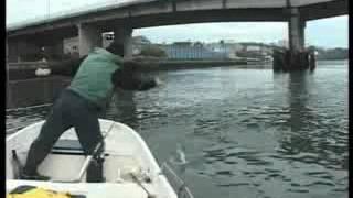 Pesca urbana de la lubina