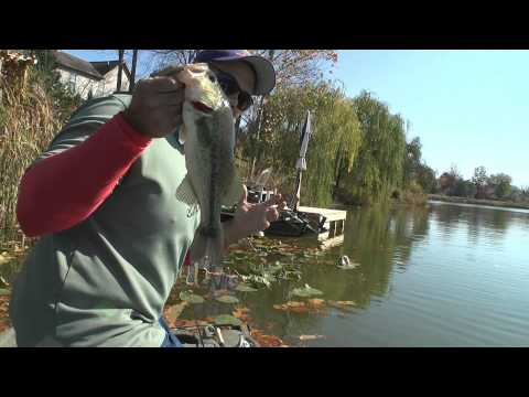Fall pond bass tips that work.