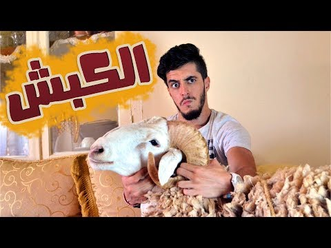Mr SaLiMDZ I Le Mouton - الكبش I سليم و سليمان