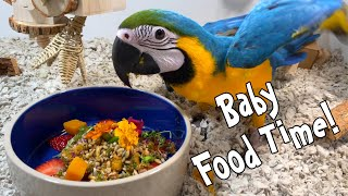 Introducing Baby Parrots to Variety of Foods My Parrots Eat