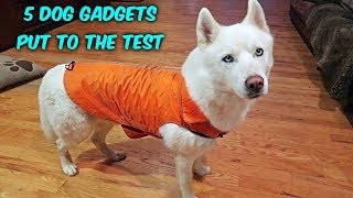5 Dog Gadgets put to the Test