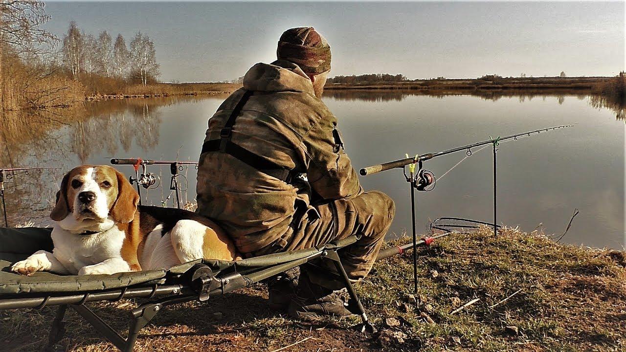сложных этапах картинка собака на рыбалке необходимо слишком