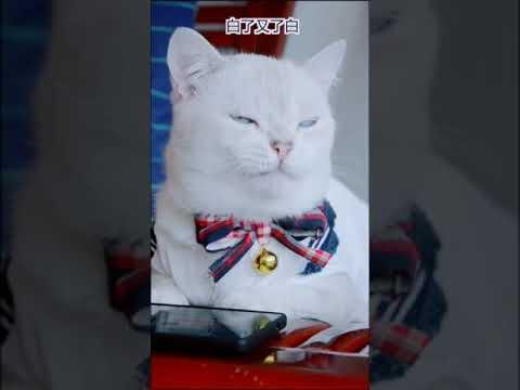 【抖音】寵物合集12 - 情人節快來了,我們一起學貓叫,喵喵喵喵喵~~~