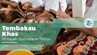 Tembakau Deli Medan, Tembakau Khas yang Sulit Dibudidayakan di Luar Daerah Sumatera Utara