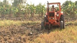 Cà Mau mưa trái mùa ảnh hưởng đến sản xuất vụ lúa hè thu