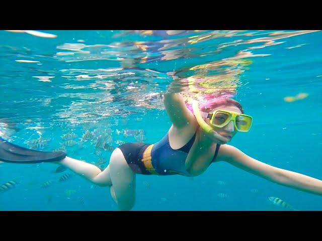Yaya Han Vlog: Barbados Snorkeling & freediving! Turtles! Shipwrecks!