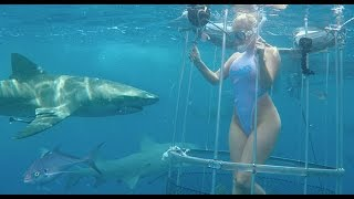 הבחורה הזו בסך הכל רצתה להצטלם עם כרישים מתחת למים, לא תאמינו איך זה נגמר!