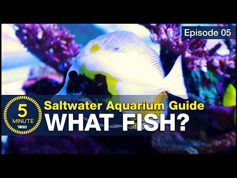 5 beginner fish EVERY saltwater aquarium should have! Stocking a tank with utilitarian fish