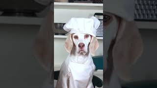 Dog Makes Gourmet Dinner #shorts: Chef Dog Maymo