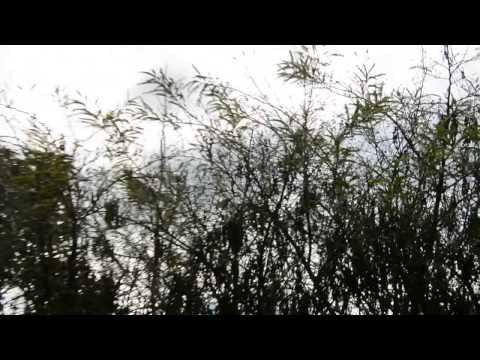 Shod balkezes parazita keresztrejtvény nyom