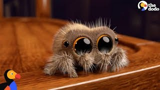 Gambar cover Lucas The Spider Creator Explains How He Makes People Fall In Love With Spiders | The Dodo