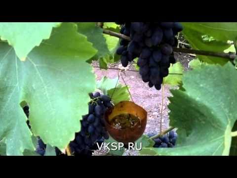отпугиватель грызунов ультразвуковой красноярск