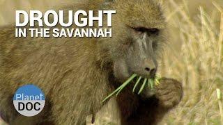 Shaba. Drought in Savannah | Nature - Planet Doc Full Documentaries