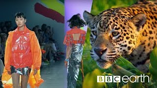 Can Fashion Be Sustainable? | BBC Earth