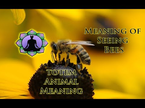 The Meaning of Seeing Bees: Animal Totems and Signs