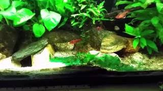 Removing Blue Green Algae (Cyanobacteria) From Substrate