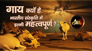 Why are cows considered holy animals in Hinduism| Aisa Kyon