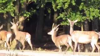 preview picture of video 'Poľovníctvo IMA Invest s.r.o., Zlaté Moravce'