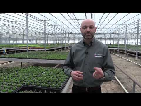 Grow A Better Liner: Video 4 Rooting Stages 3 and 4 thumbnail
