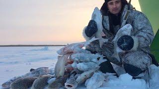 За язём. Часть 1-2 / Зимняя рыбалка на язя / Язь / Обь