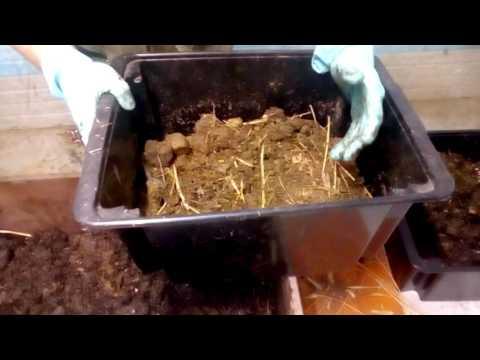 Wie der Würmer vom Darmkanal herauszuführen