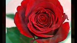 Wild Hearts - Roy Orbison