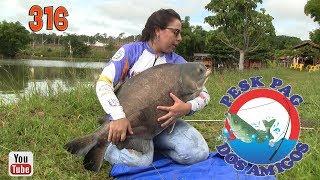 Programa Fishingtur na TV 316 - Pesk Pag dos Amigos