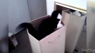 Приколы с кошками.  Очень смешное видео.
