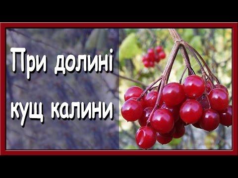 Українські пісні онлайн. При долині кущ калини